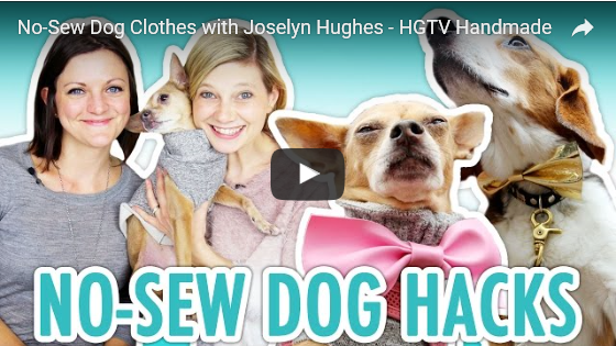 No-Sew DIY Dog Clothes!