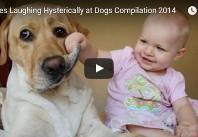 Babies Laughing Hysterically at Dogs