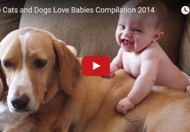 Cute Dogs and Cats Love Babies!