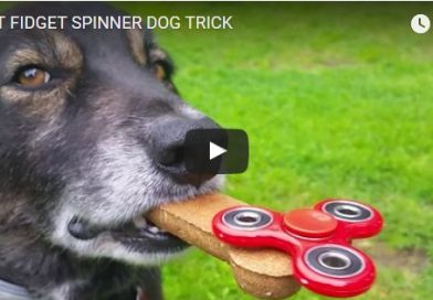 Is this the Best Spinner Dog Trick?